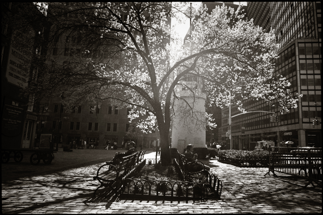 Spring NYC photograph by John Strazza